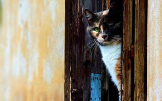 Как сделать вход для кошки в двери?